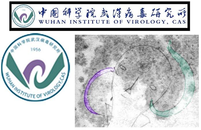 Coincidencia entre el logo del Instituto de Virología de Wuhan y la psicografía de Solari Parravicini
